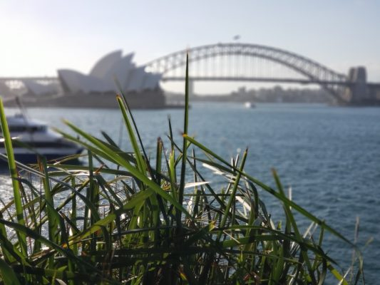 View of the Sydney Harbor Bridge from the Royal Botanical