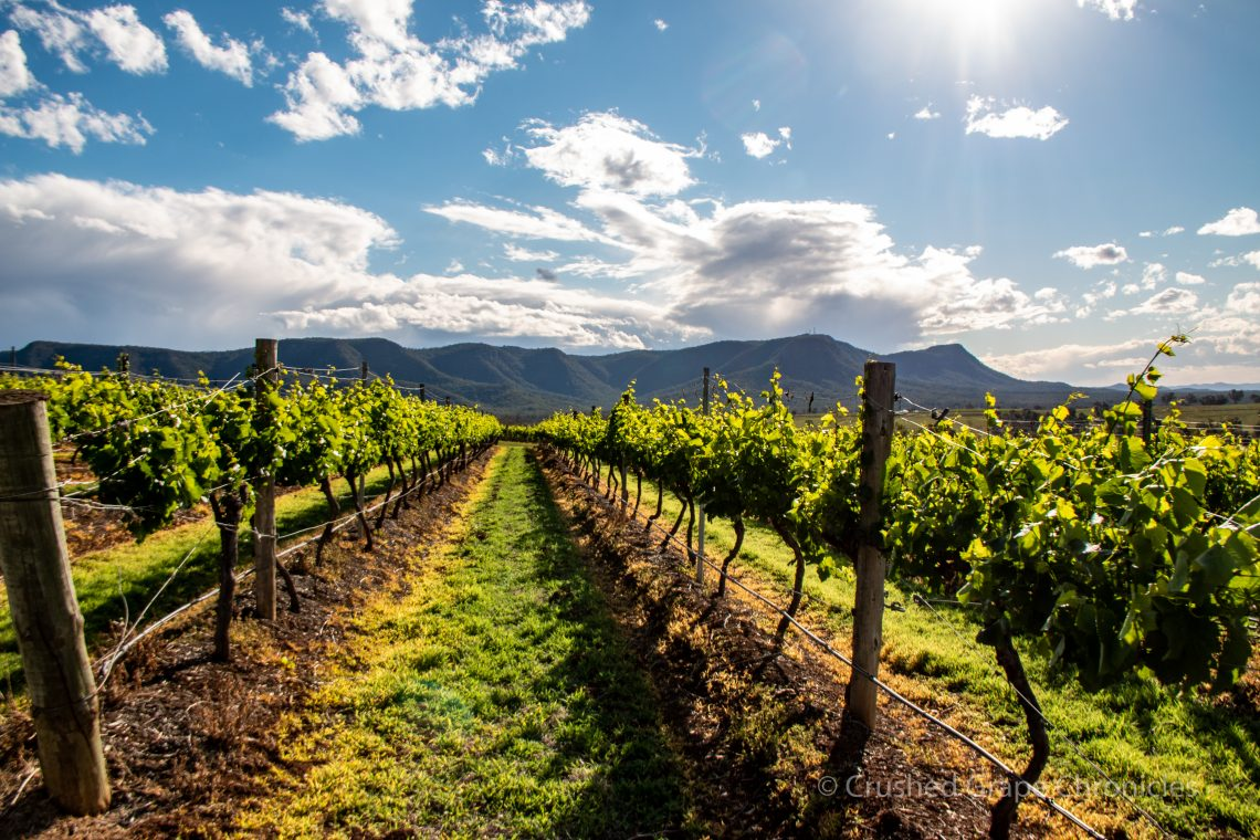 Scarborough Vineyard, Hunter Valley Australia