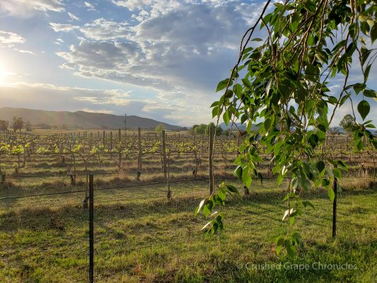 Vinifera Vineyard Sunrise Mudgee NSW Australia