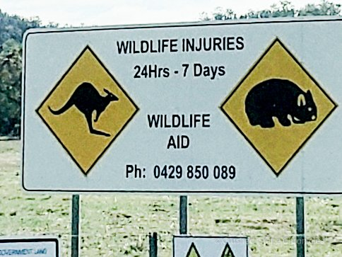 WildLife Injuries Hotline in Australia