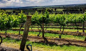 Scarbourgh Wine in Hunter Valley Australia,