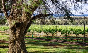 Scarbourgh Wine in Hunter Valley Australia