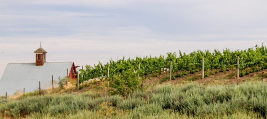 Armstrong Family Estate Vineyard, Walla Walla, Washington