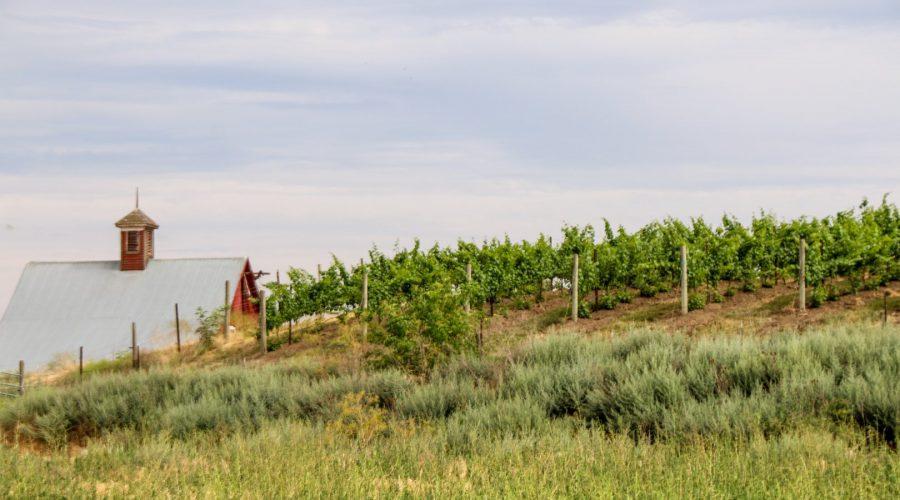 Armstrong Family Estate Vineyard, Walla Walla, Washington