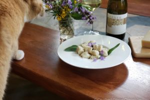 Pantry Pairing with Gnocchi, Viognier and curious cats