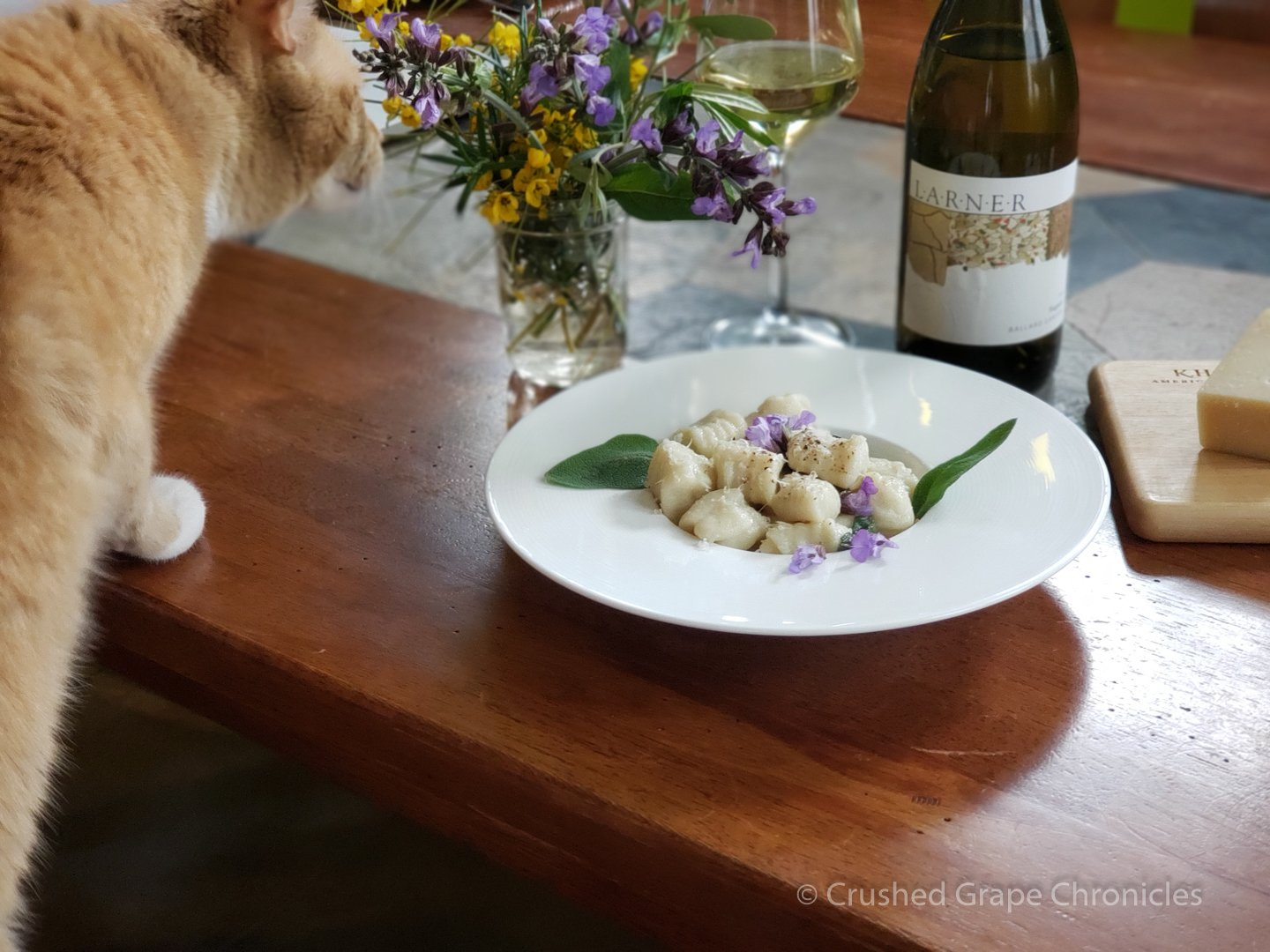 Gnocchi, Viognier and curious cats