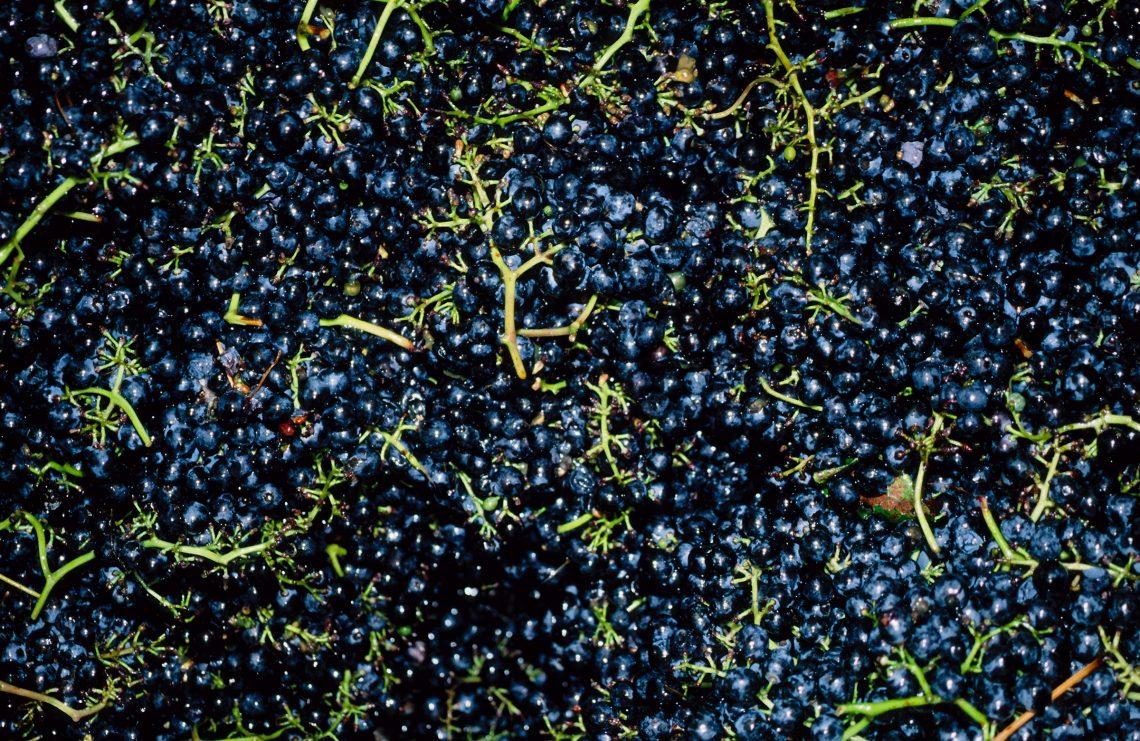 sgualcitura vino lambrusco grasparossa di castelvetro prodotto tipico modena emilia romagna