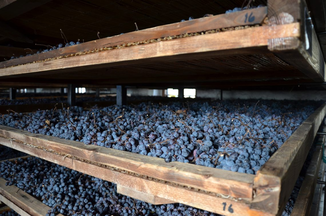 Appassimento delle uveGrapes drying for the Appassimento method of making Amarone in Valpolicella Italy,