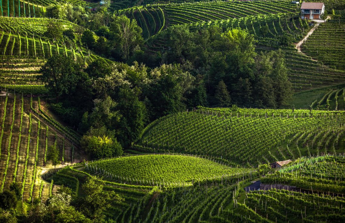 The picturesque landscape full of vineyards around the town of Valdobbiadene, an area renowned for its sparkling wine, Prosecco