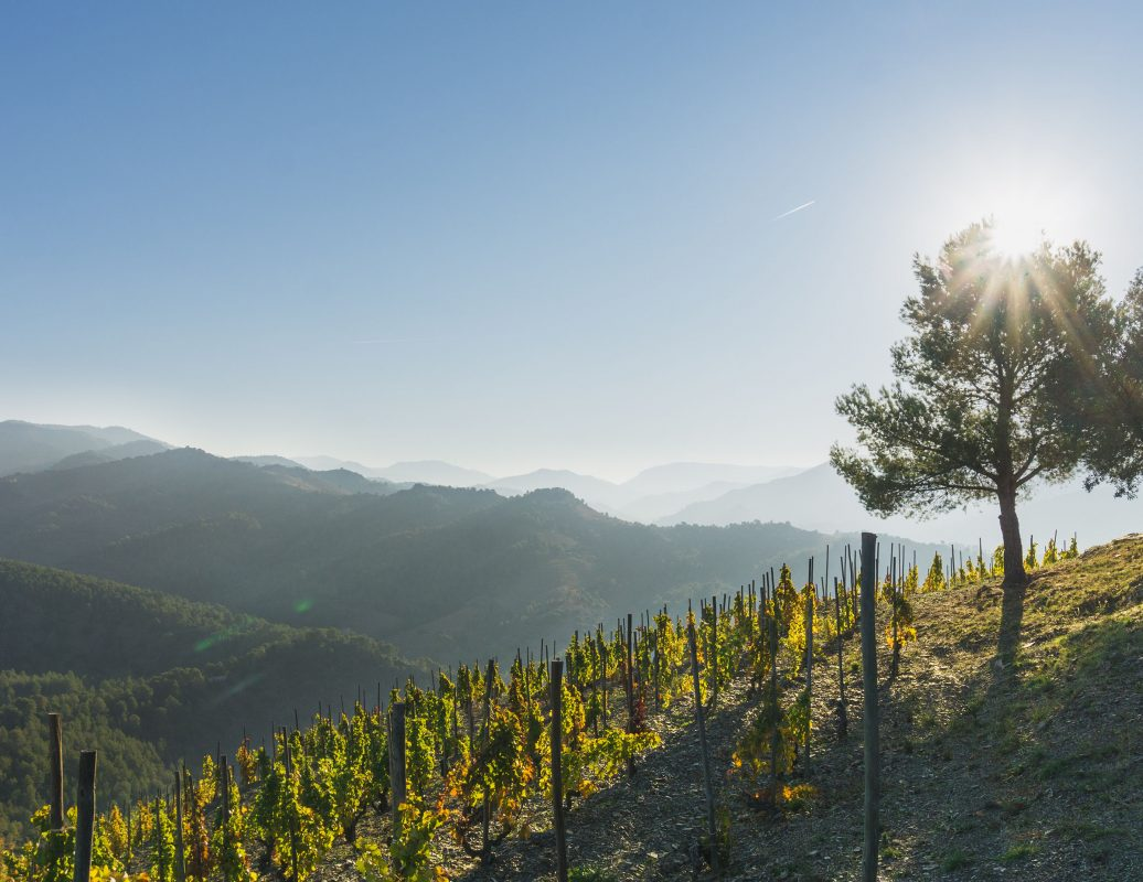 Mountains and vineyards in Priorat, Spain