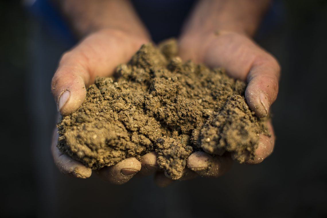 Soil and biodynamic preparation in hands at Caiarossa Photo courtesy of Caiarossa (maker of Super Tuscans)