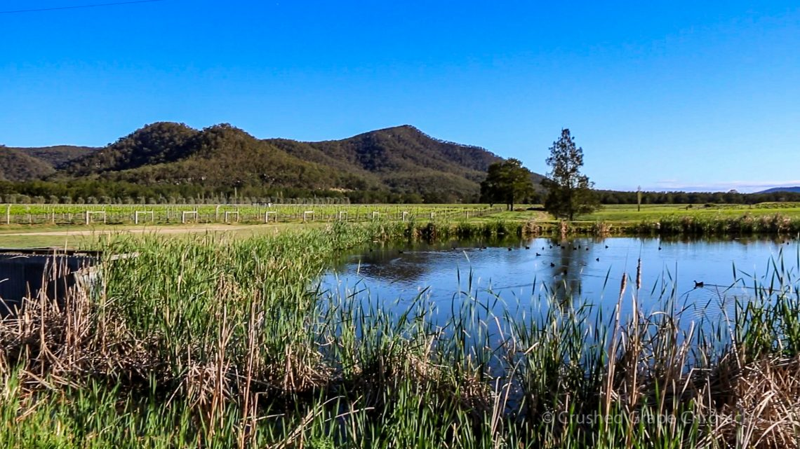 The pond for irrigation at Krinklewood biodynamic vineyard NSW Australia