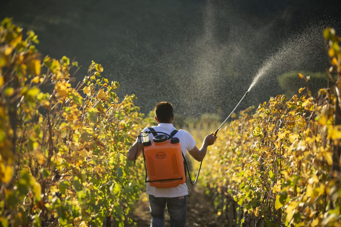 A Biodynamic preparation being sprayed by a vineyard working in the vineyard at Caiarossa in Tuscany Photo courtesy of Caiarossa