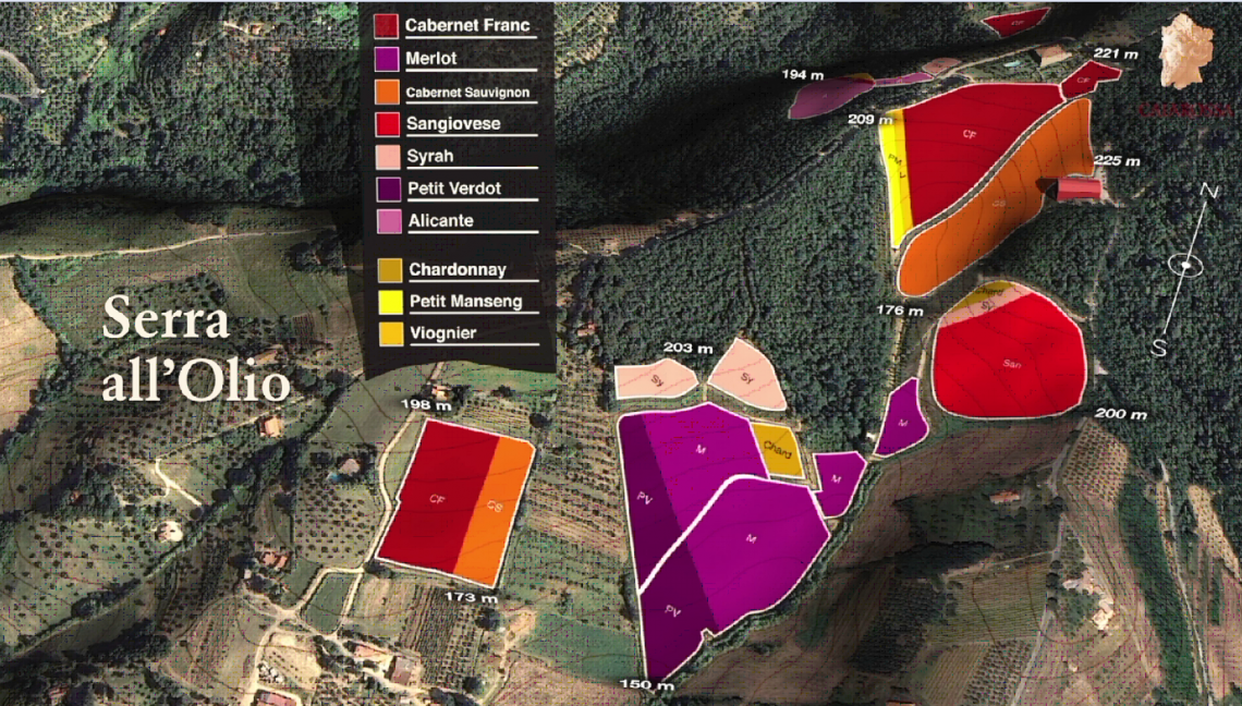 Varietal map of blocks at Caiarossa's Serra all'Olio Vineyard in Tuscany, courtesy Caiarossa