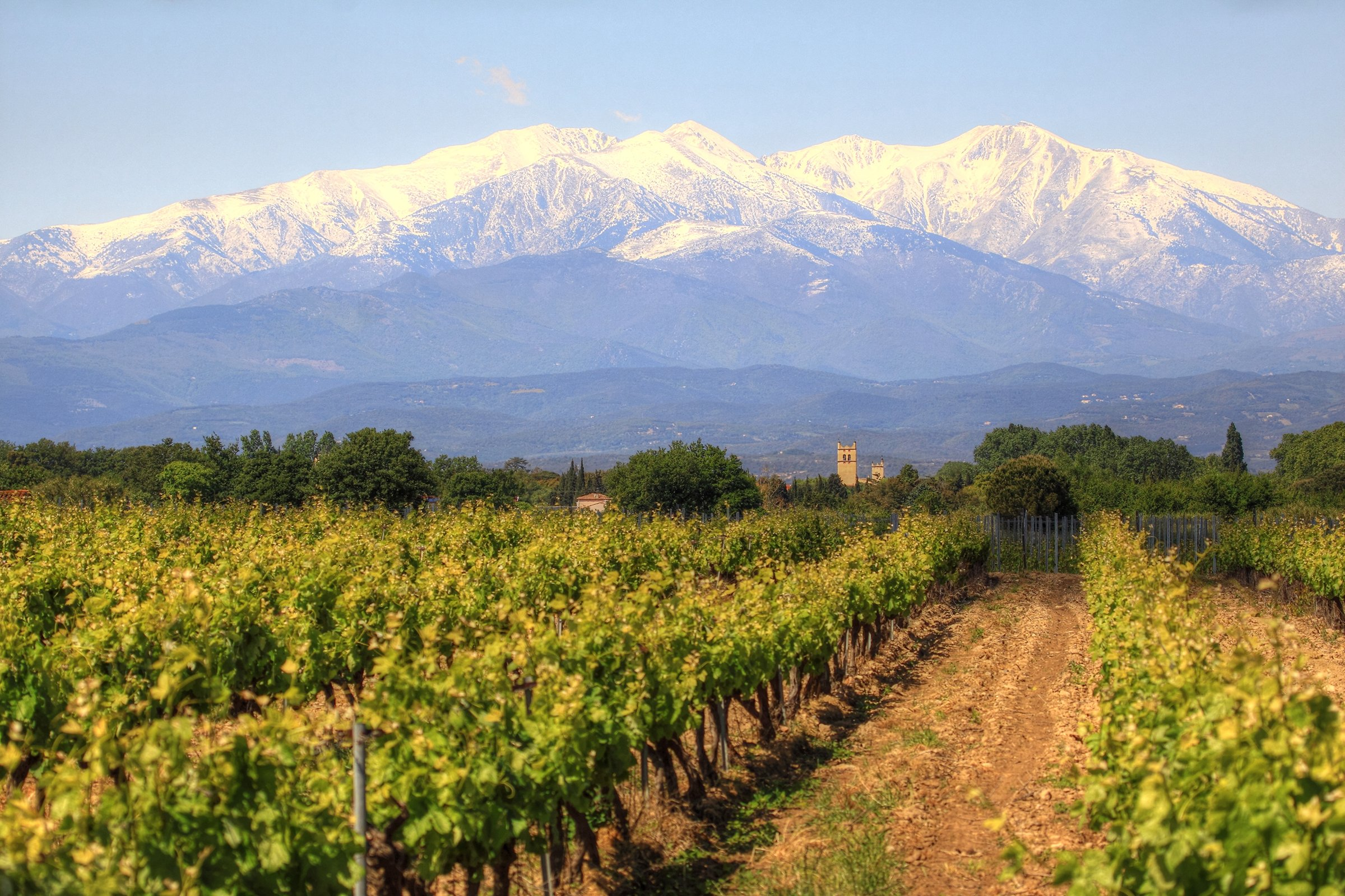 Snow capped Pyrenees and vineyardVignoble avec vue sure le Mont Canigou dans les Pyrenees Orientales (France) by matteo Scarano Adobe Stock