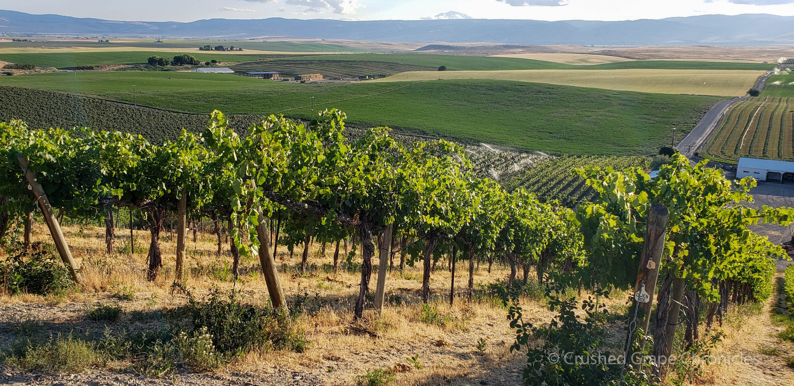 From Chapel hill looking west at Mt. Adams, from Red Willow Vineyard in Yakima Valley AVA in Washington State