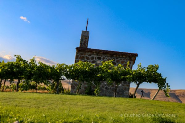 Red Willow Vineyard Chapel Block Grapes in Yakima Valley AVA in Washington State