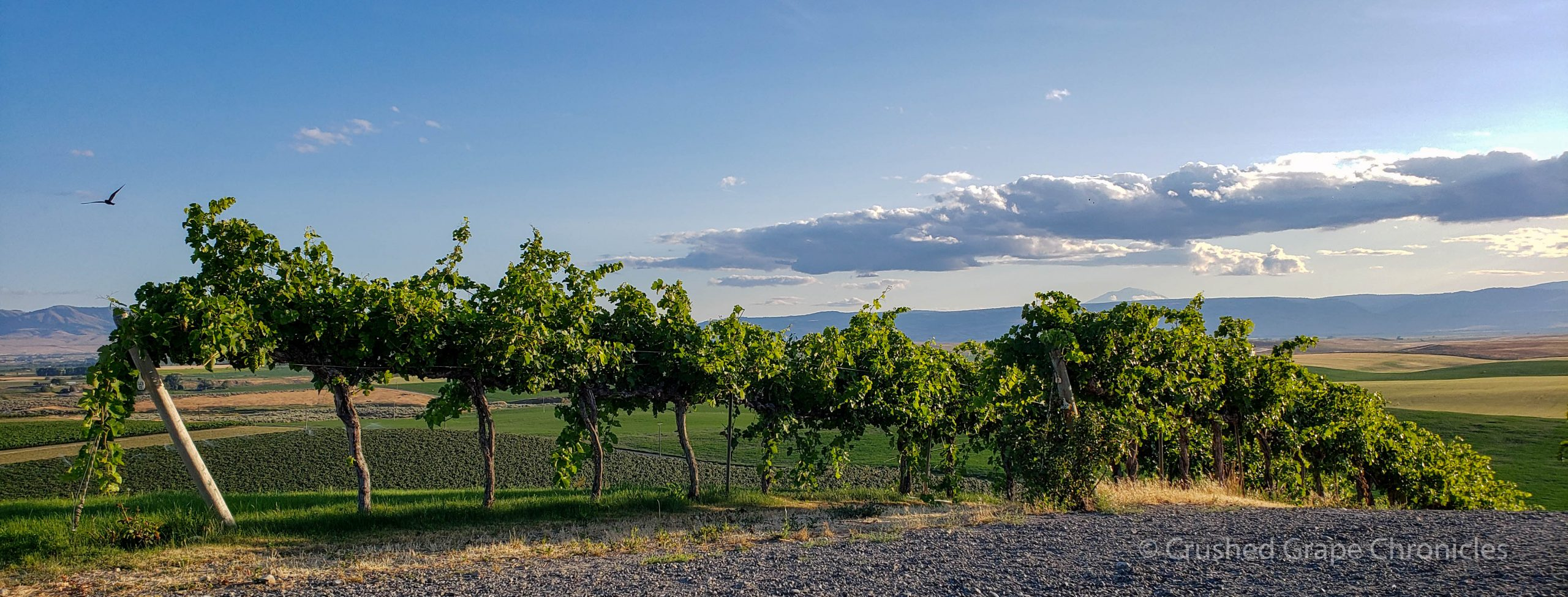 South of the chapel birds vines clouds on Red Willow Vineyards in Yakima Valley AVA in Washington State