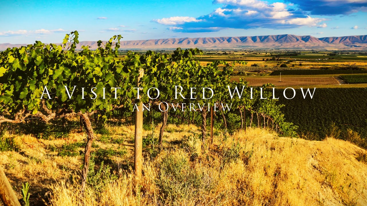 A visit to Red Willow Vineyards, an Overview