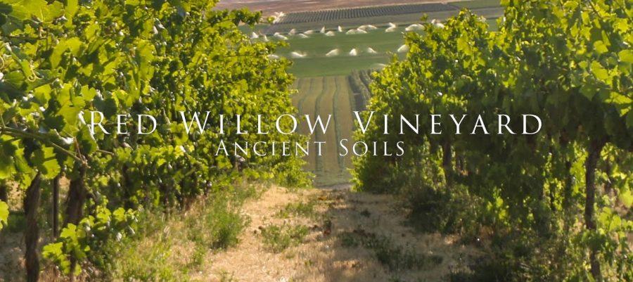 Ancient Soils at Red Willow Vineyard