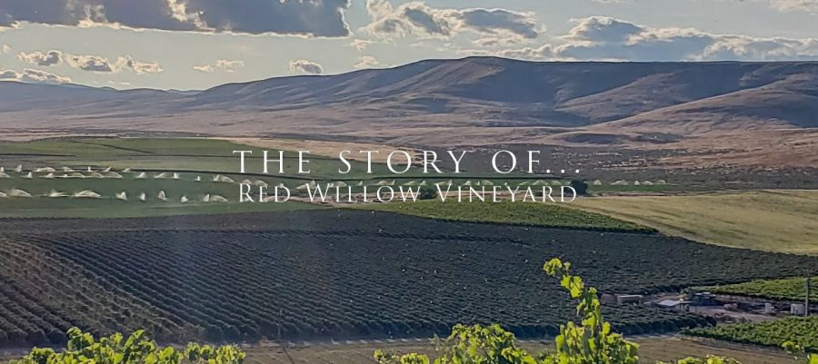 the story of Red Willow Vineyard