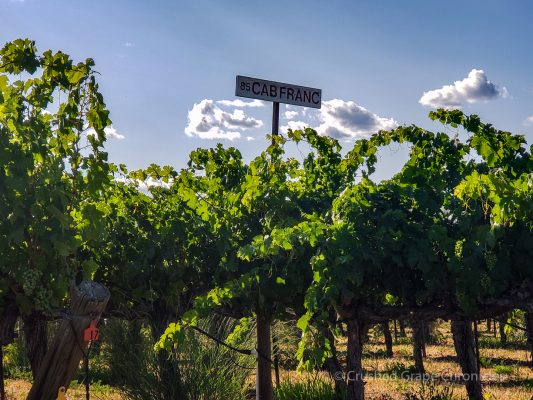 Red Willow Vineyard Cab Franc Grapes in Yakima Valley AVA in Washington State