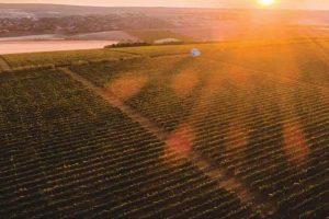 Vineyards in Moldova courtesy Wine of Moldova