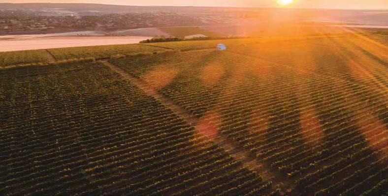 Vineyards in Moldova courtesy Wine of Moldova