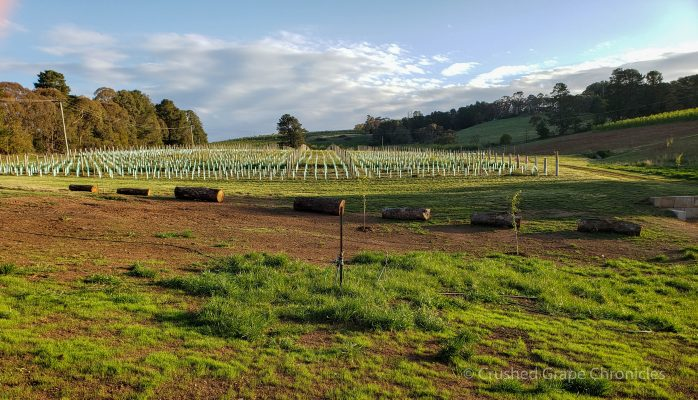 Printhie's new Millwood Vineyard in Nashdale, Orange, NSW Australia