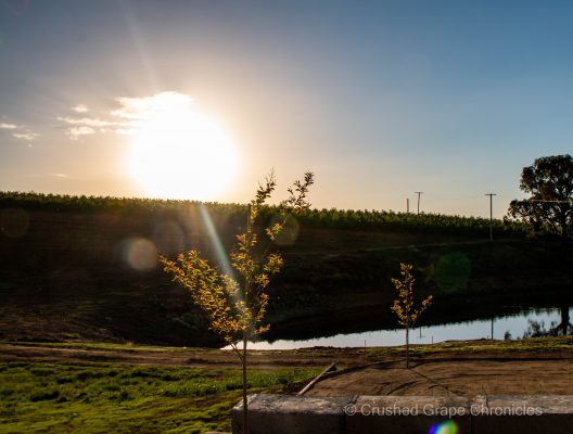 The sun setting over the orchard on the ridge at Printhie's Nashdale Cellar door just outside Orange NSW Australia
