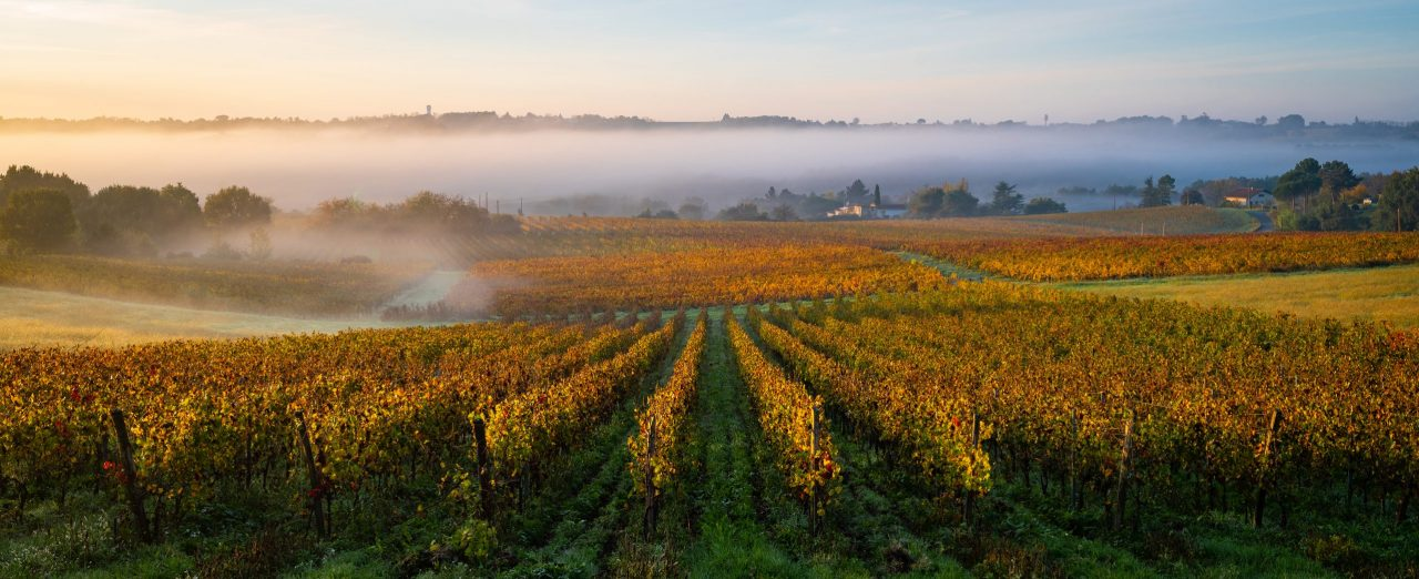 Bordeaux Vineyard at sunrise in autumn Entredeuxmers Langoiran Gironde France - photo adobe stock by FreeProd