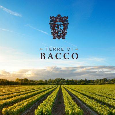 The Vineyards that the wines of Terre di Bacco come from in Italy - photo courtesy Terre di Bacco