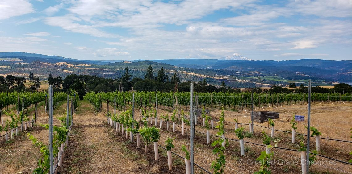 Steep Creek Ranch Vineyard at Syncline Winery with Mount Hood in the background