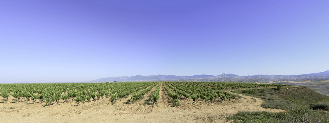 Panoramica Alto Cantabría Vineyard in Rioja - photo courtesy Conde Valdemar
