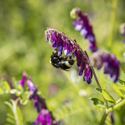 Bonterra works with Solera Bee Farm providing a chemical free habitat with native plants for the bees