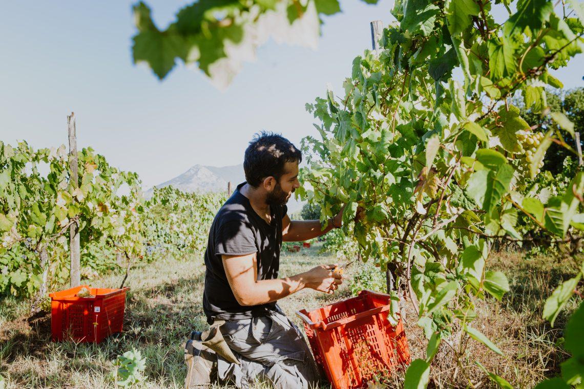 Emi Picture Courtesy of Azienda Agricola SETE Priverno LT Lazio