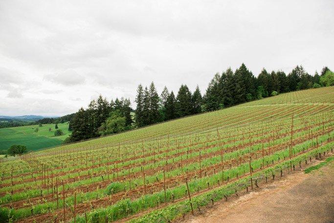 The steep vineyard at Lenné Estate (photo courtesy Lenné Estate)
