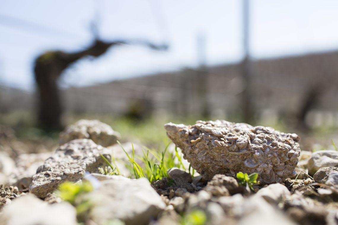Kimmeridgian Marl in the vineyards of Chablis - Sebastien BOULARD - Photo Courtesy Wines of Chablis