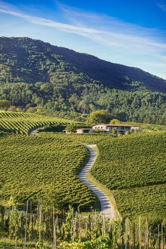 Hiruzta Bodega in Spain's Basque Country where Txakoli is their specialty (photo courtesy Hiruzta Bodega)