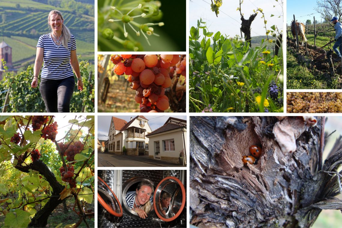 Agathe Bursin Alsace Collage (photos Courtesy Agathe Bursin)