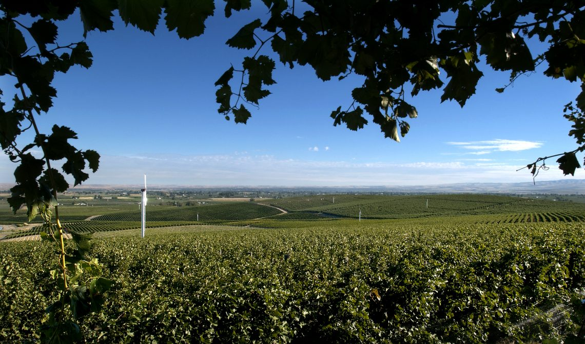 Seven Hills Vineyard gazebo