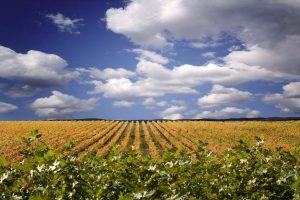 Navarra Wine Region (photo courtesy Navarrawine.us)