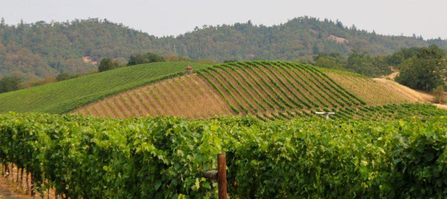 Abacela Vineyards in Oregon's Umpqua Valley