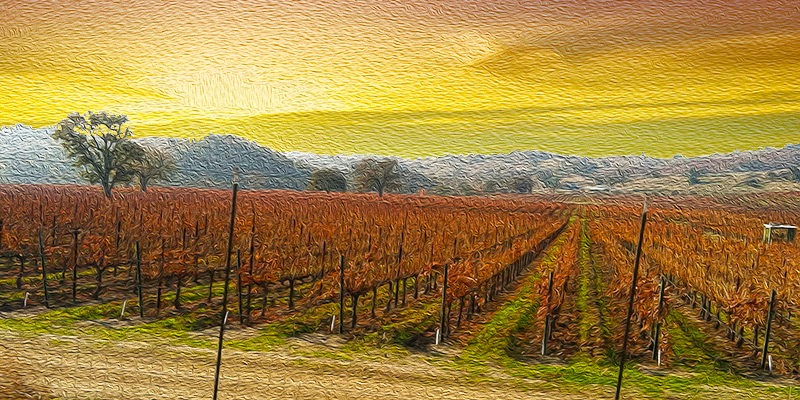 Sunset in Paso Robles